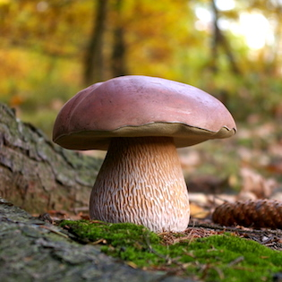 hřib ze dřeva, houba ze dřeva, dřevěná houba
