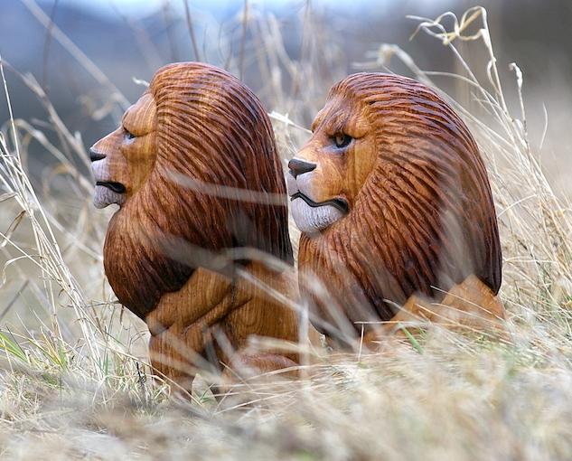 lev ze dřeva, lvi